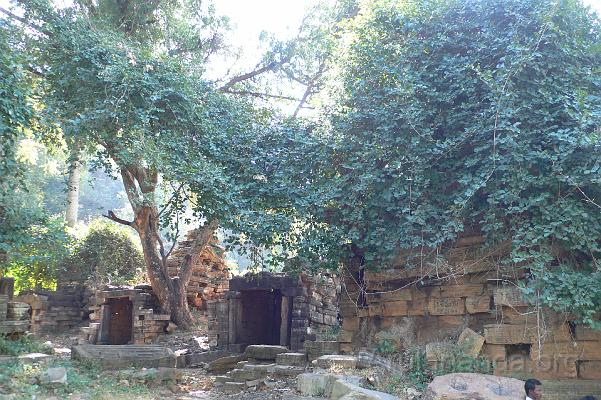 Image result for ammavaru pics inforest